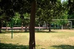 pineta2-campi-salentina